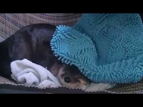 Otter Doesnt want To Wake Up