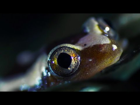 The Lung Fish | Nile | BBC