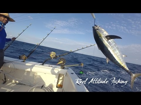 Trolling For Blackfin Tuna Offshore Fishing Bermuda