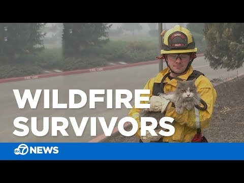 Residents, first responders deal with aftermath of Camp Fire in Paradise, California