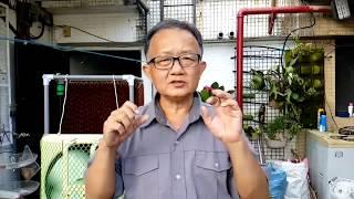 愛迪先生/ DIY專業水簾扇的製作 水濂扇 水冷扇 水冷氣夏日降溫利器