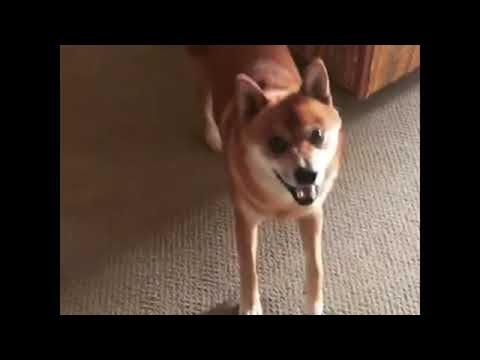 Dancing Dog with Fancy Feet || ViralHog