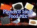 Pigeno's Ideal Food List || Pigeon Mix Feed ||