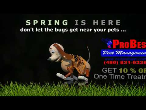 Pet-Safe Pest Control in Arizona - Pet Friendly Pest Control AZ