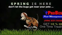 Pet-Safe Pest Control in Arizona - Pet Friendly Pest Control AZ