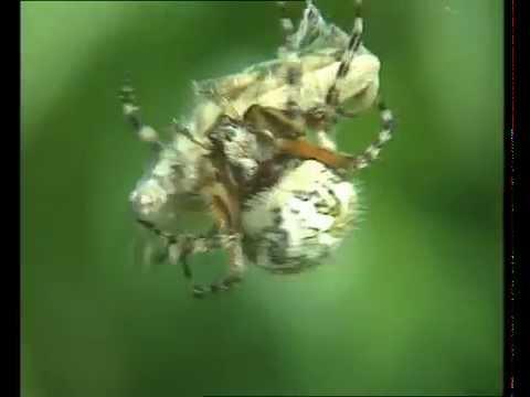 Grillons et sauterelles - Documentaire Animalier