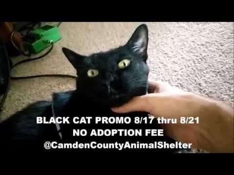 Black Cat Appreciation - FREE ADOPTIONS