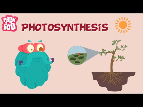 Photosynthesis | The Dr. Binocs Show | Learn Videos For Kids - YouTube