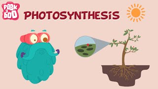Photosynthesis | The Dr. Binocs Show | Learn Series For Kids
