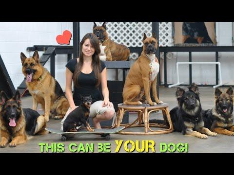 Smart K9 Dog Training |  Amazing Dogs!
