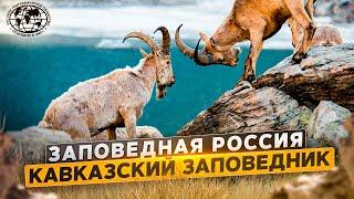 Заповедная Россия. Кавказский заповедник Русское географическое общество