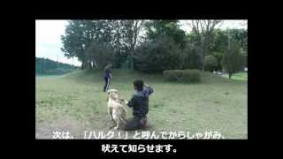 【ピースウィンズジャパン】災害救助犬ハルクの挑戦 2012.5.4