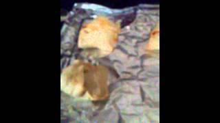 Sloppy Joe Stuffed Crescent Rolls