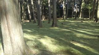 苔が見たことないくらい綺麗に手入れされていて圧巻でした、、、 こちら...
