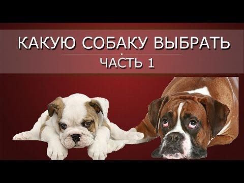 Какую собаку выбрать, часть 1