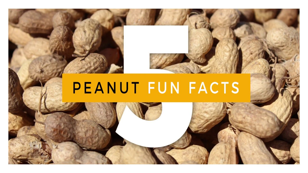 24 Fun Facts about Peanuts & Peanut Butter | National Peanut