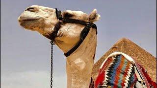 egypt travel vlog p2 | Luxor city, hot air ballon ride and finally the pyramids.