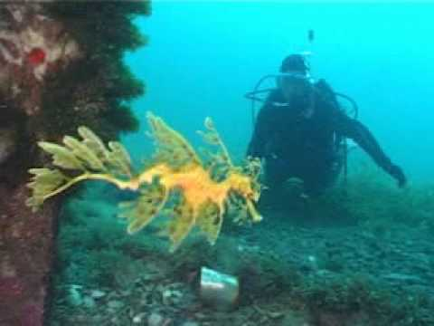 Australia Leaf Fish Diver