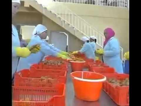 L'industrie des cosmétiques usine d'exportation Le Figuier de Barbarie