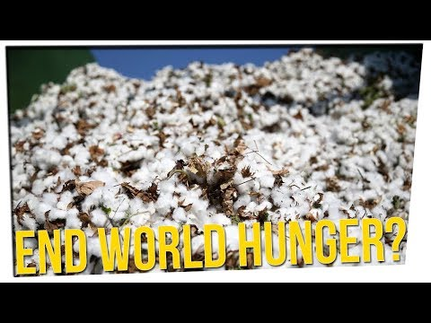 USDA Approves Cotton Seeds as Food ft. Dumbfoundead & David So