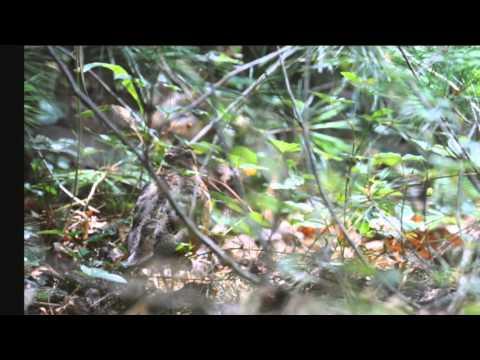 Bird Watching in North Texas & Pennsylvania