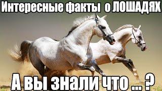 ТОП 10 Интересные факты про ЛОШАДЕЙ. Лошади, пони, конь. Фото, видео лошадей. А вы знали что...?