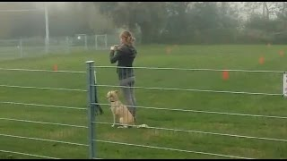 Companion Dog Test - Passed - At Dog Training Field