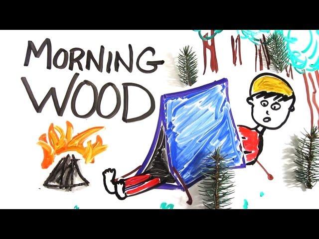 Wie entsteht eine Morgenlatte - The Science of Morning Wood