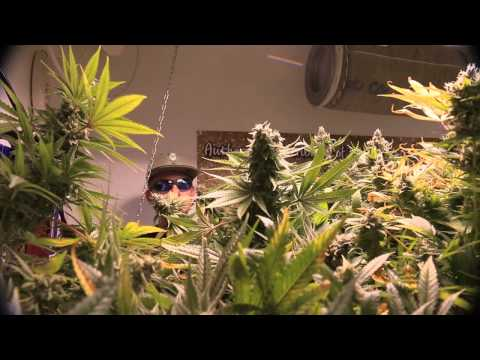 The Weed Nerd Featuring Hunters of the Dank Part 15