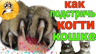 Как подстричь когти кошке или коту в домашних условиях /Семья Козырь