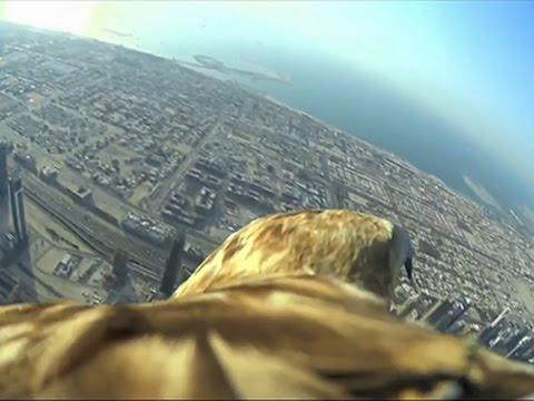 Raw: Bird's-eye View of Dubai Sets New Record