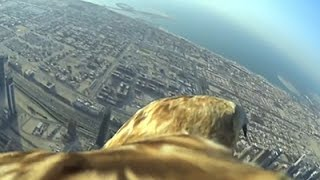 Скачать Raw Bird S Eye View Of Dubai Sets New Record