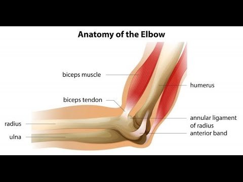 Elbow Tendonitis Ask The Dpt Episode 1 Youtube