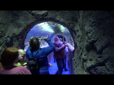 The 1st Walk Through Tunnel At Via Aquarium In Rotterdam, NY