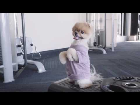 Jiffpom Workout - The World's Cutest Puppy