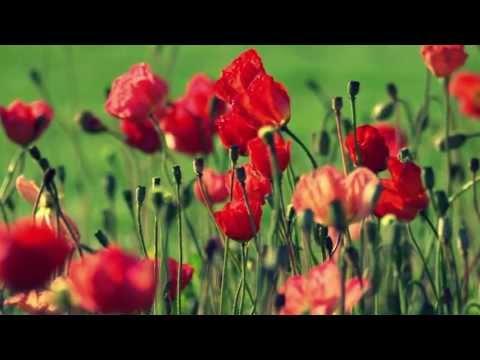 ОБОДОК с Красными Цветами из ФОМА Своими Руками/ DIY Eva Foam Flower Headband