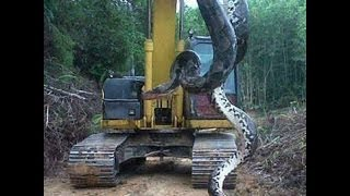 huge snake caught in kashmir