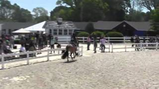 Video of BEST OF ALL ridden by MADELINE AHERN from ShowNet!