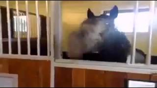 Ржачная лошадь Юмор! Прикол! Смех