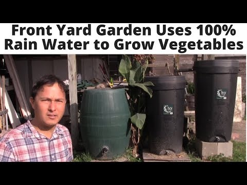 Front Yard Garden uses 100% Rain Water to Grow Vegetables