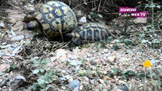 Ερωτας στα χρόνια της... χελώνας.Eidisis.gr webTV
