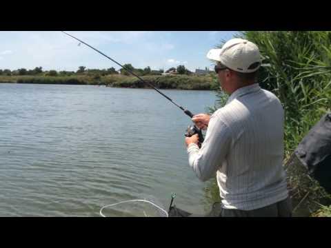 Рыбалка в Николаевской области. Краснополье. Амур 8.1 кг