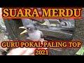 Pancingan Suara Merdu Jalak Kebo Guru Pokal Paling Dicari  Mp3 - Mp4 Download