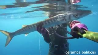 Trofe Barakuda/Turna  Avları(4kg, 4kg, 3kg) Zıpkınavı Spearfishing
