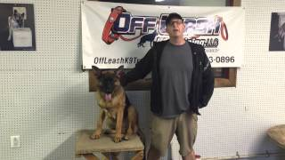 Basic Obedience Package: Baton Rouge Dog Trainer