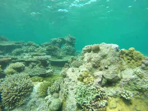 Apo Reef - Occidental Mindoro