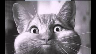 кошки самые умные