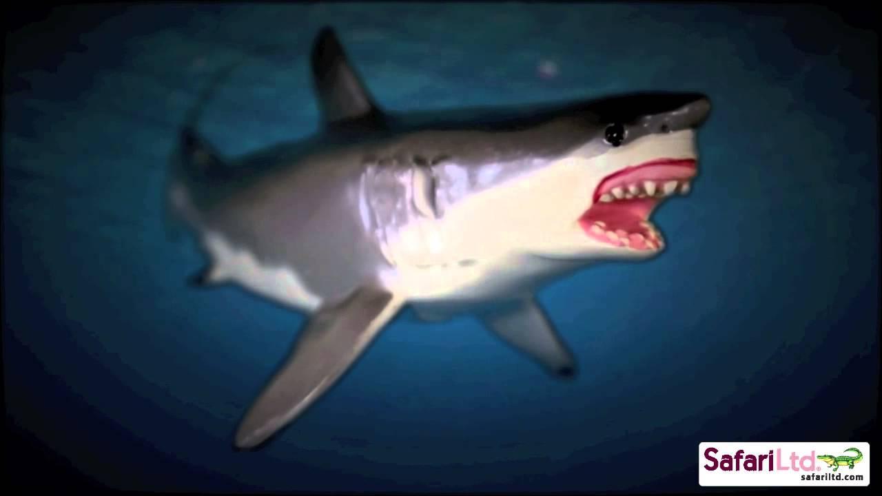 safari ltd monterey bay aquarium great white shark 360 degree view