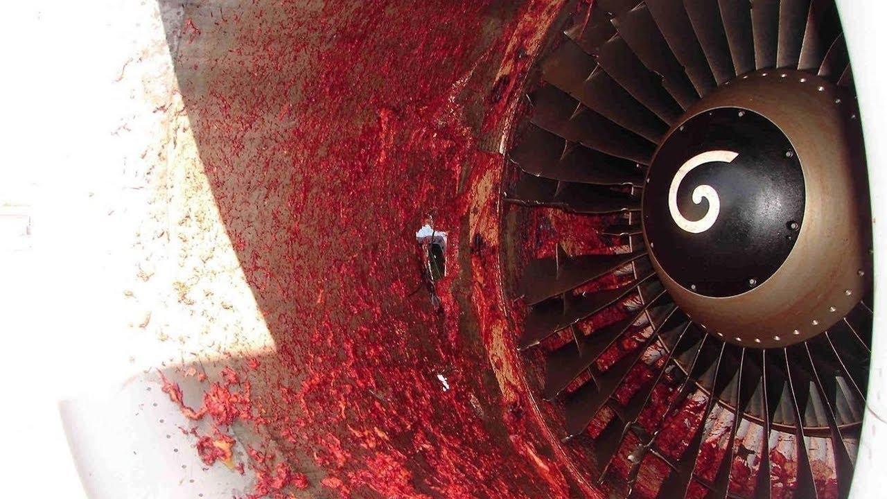 Birds Vs Aircraft Video Collection 2016 Crash 5