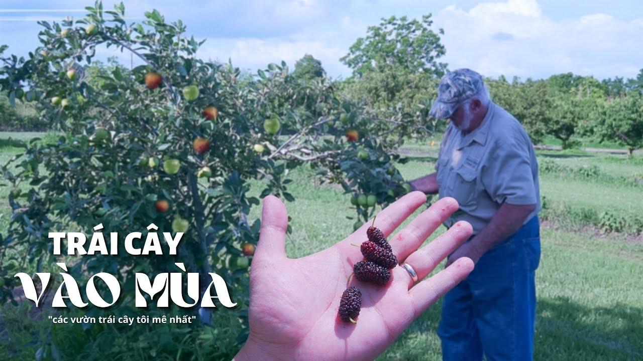 Trái Cây Vào Mùa ( các vườn trái cây mà tôi mê)